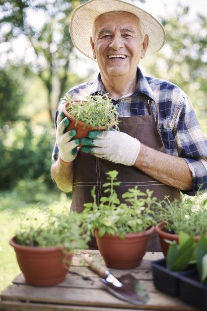 senior-man-working-field-with-plants_329181-12442